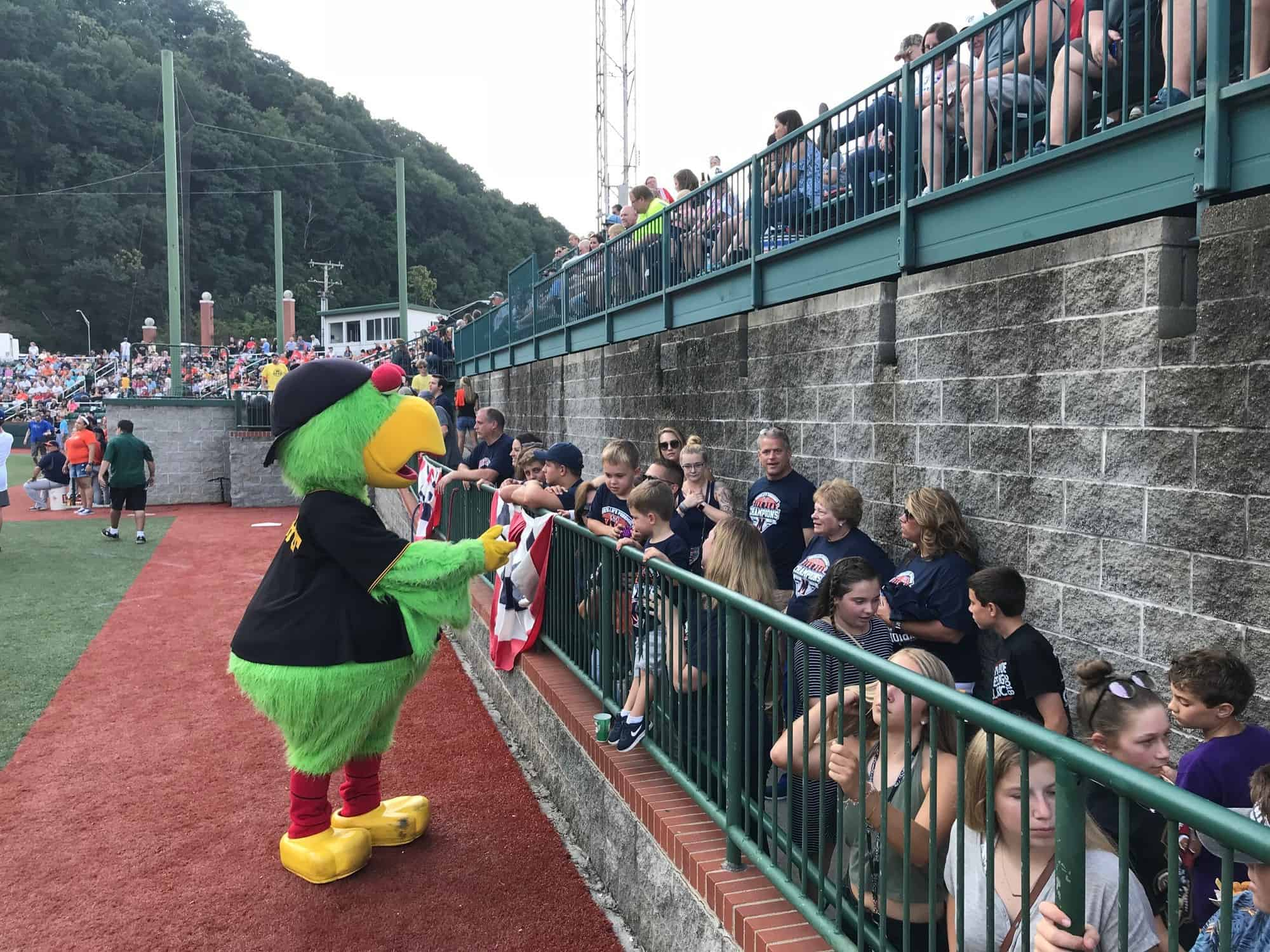Pirates Parrot with fans